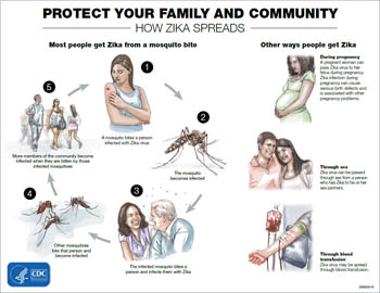 CDC_Zika-Transmission-Infographic