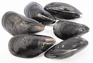 Sport-Harvested Mussel Quarantine  Lifted along the California Coast