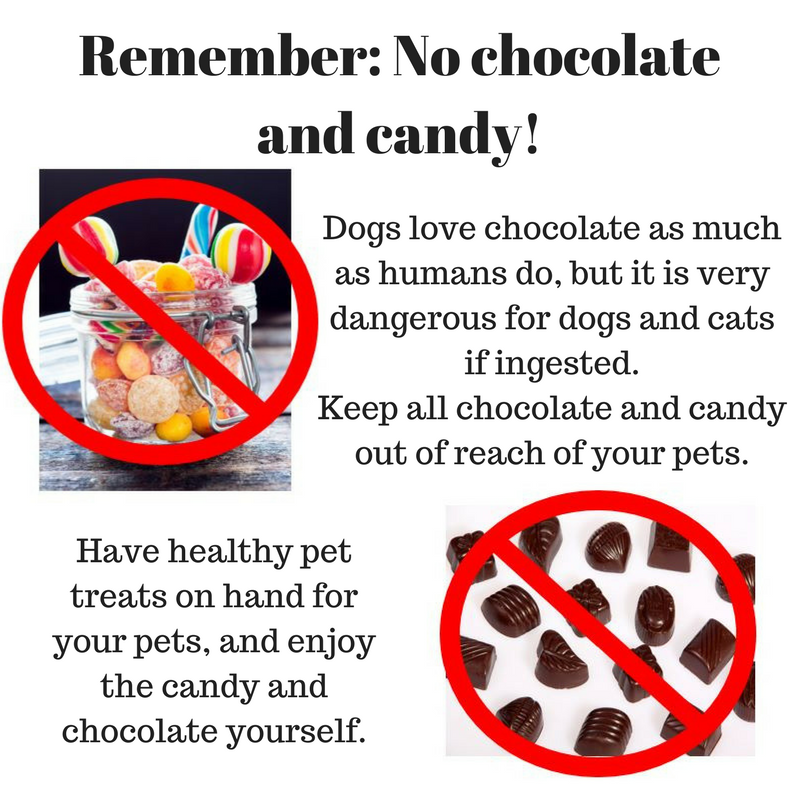 Remember_ No chocolate and candy!