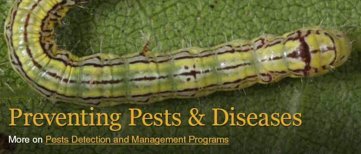 preventing pests slide