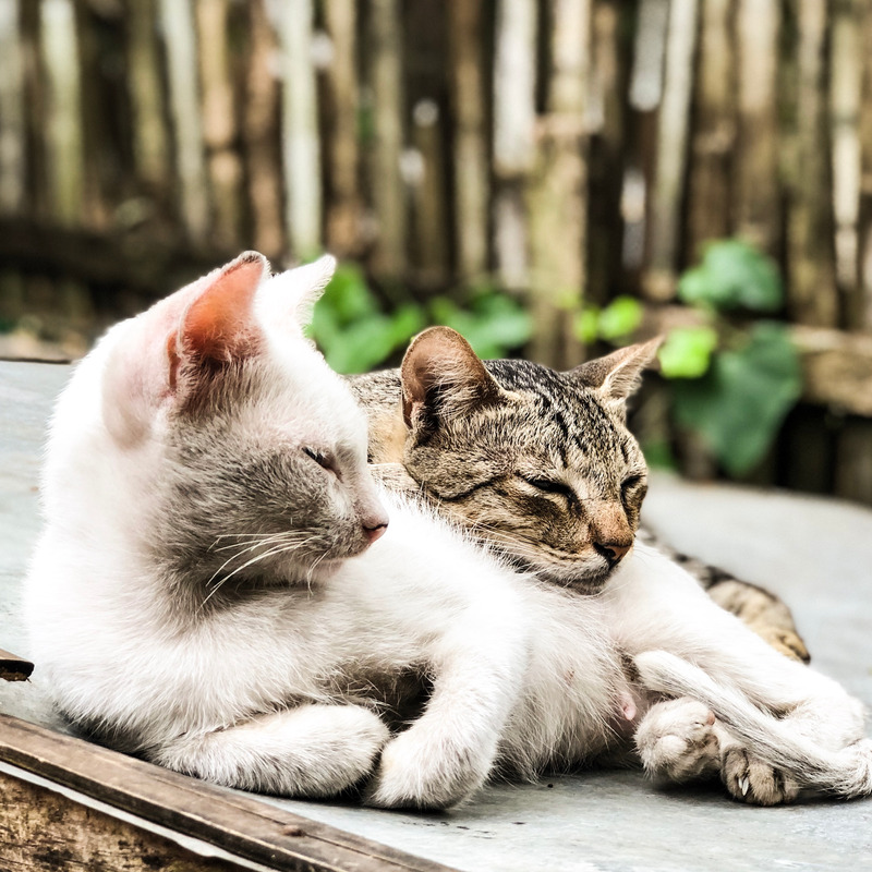 Canva - Close-Up Photography of Tabby Cats Laying