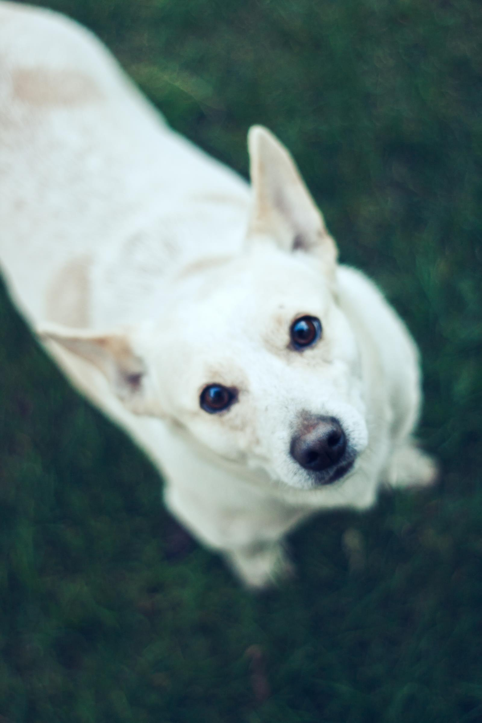 Canva - Cute dog II