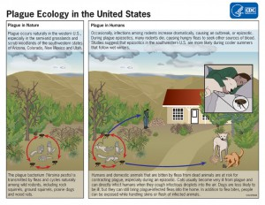 CDC Plague Ecology U.S.A