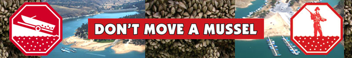 """Don't Move a Mussel"" ad banner"