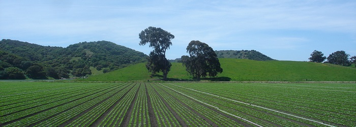 beautiful view of the Salinas valley fields