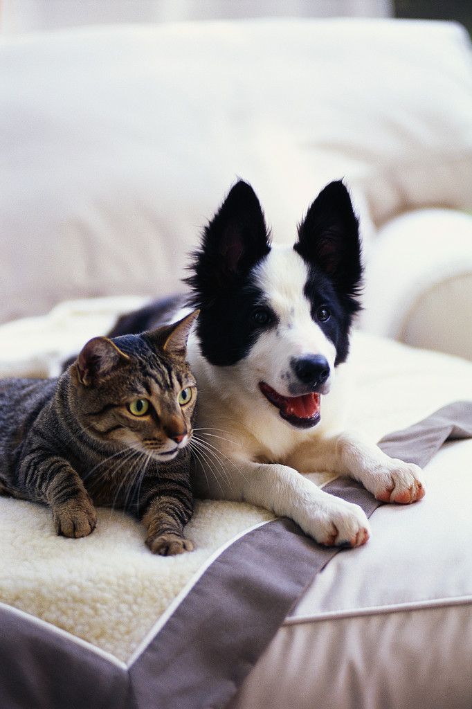 cat-and-dog-on-bed