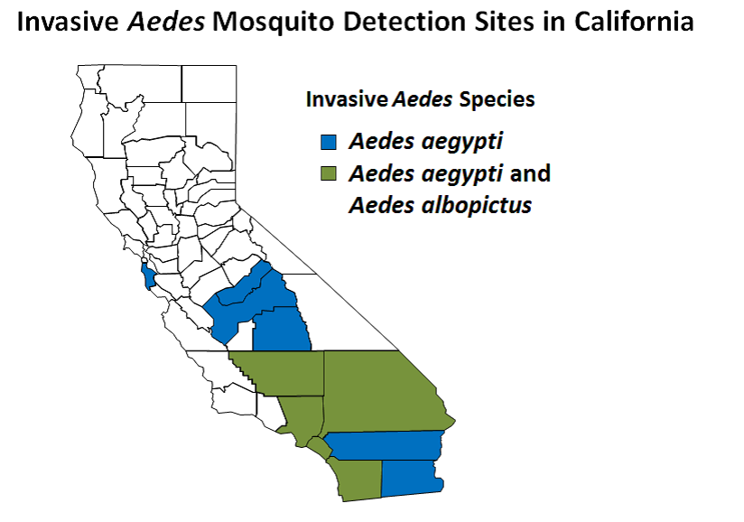 invasive aedes in California CDPH