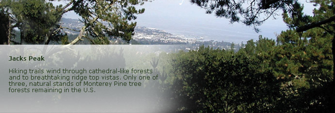 jacks peak page banner of tree tops