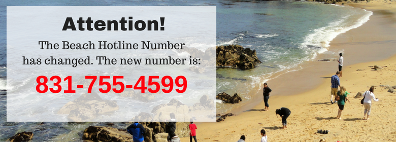 Beach Hotline Number