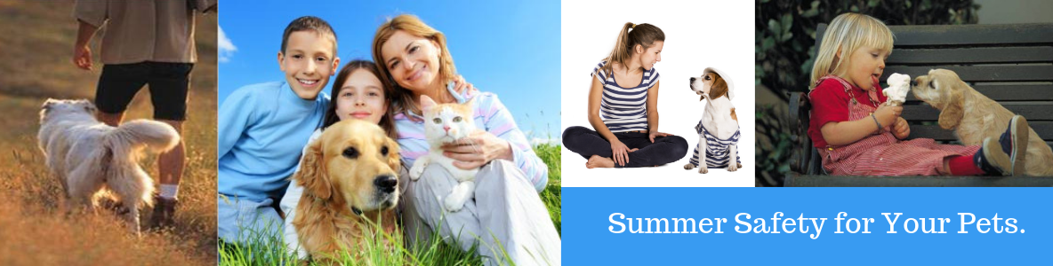 Summer Safety for your pets.