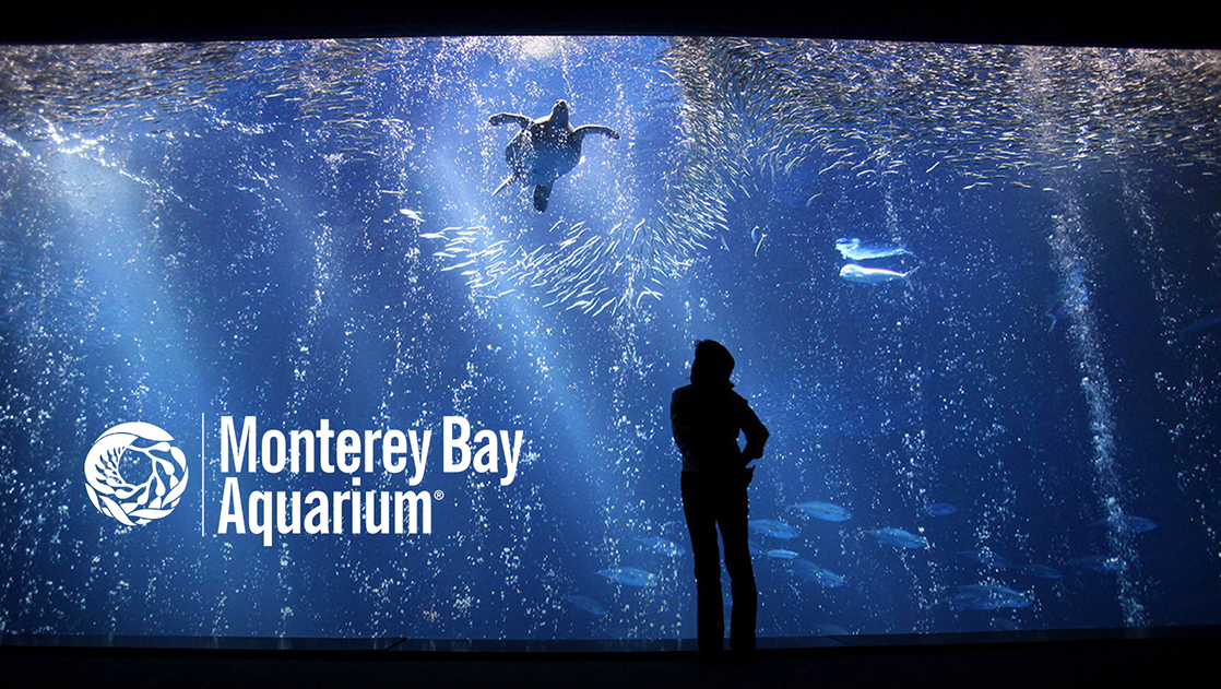 Monterrey Bay Aquarium title with a person looking into a aquarium with a turtle and fish swimming.