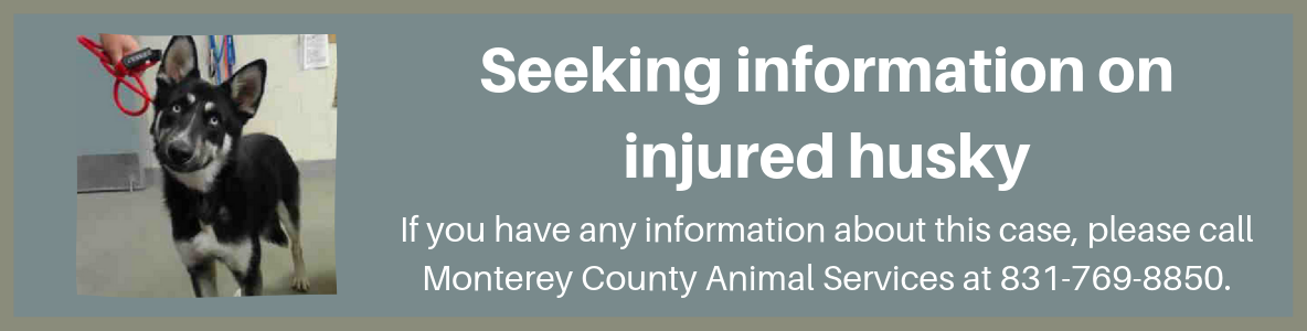Seeking information on injured husky