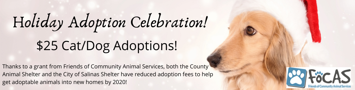 Holiday Adoption Celebration!
