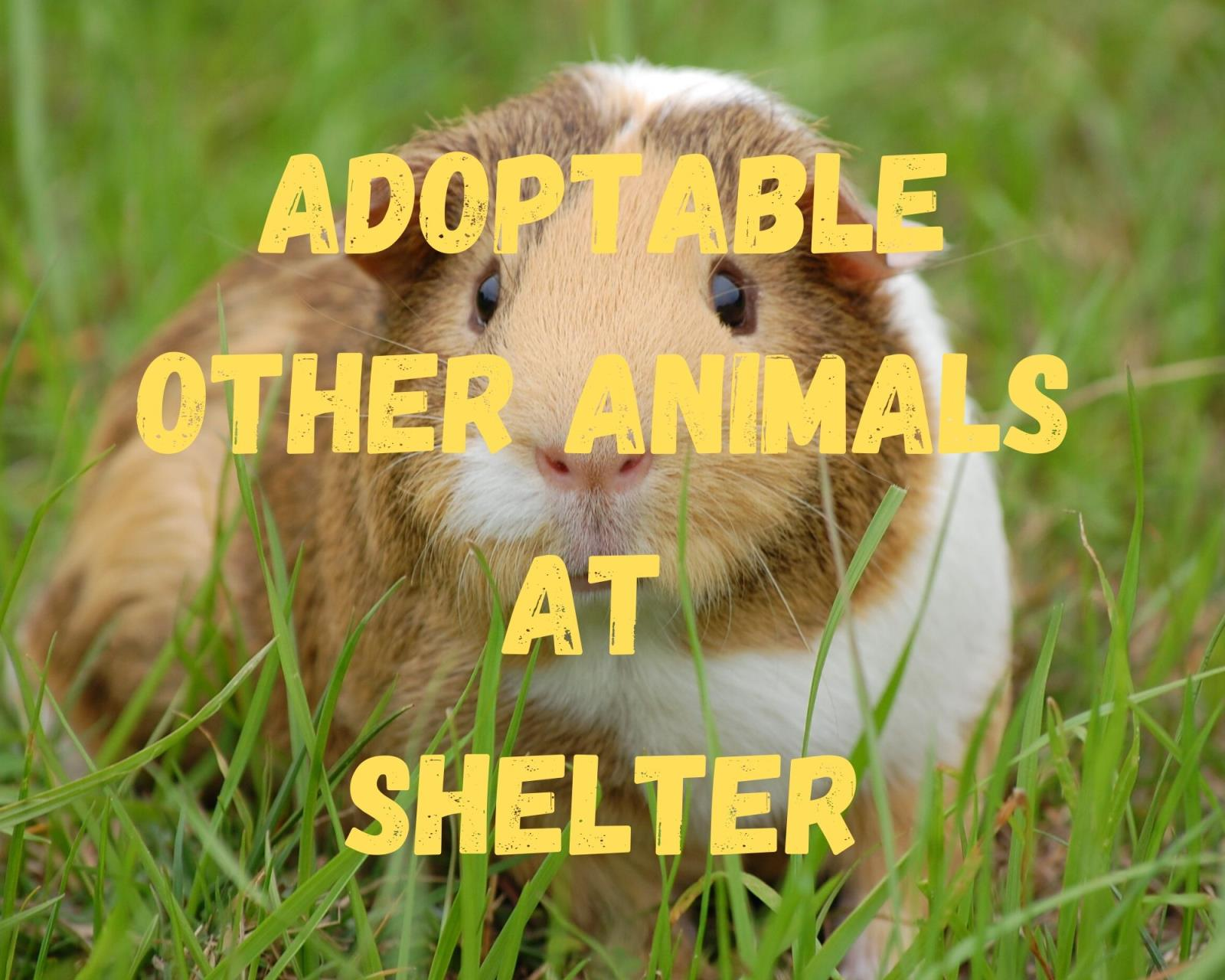 Adoptable OTHER at Shelter