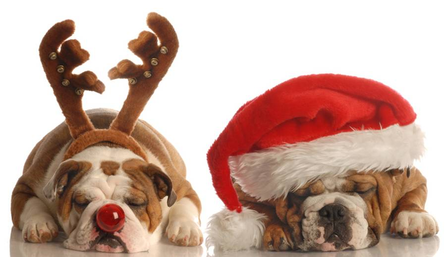 dogs in santa hat and antlers